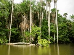 Lake Sandoval, Amazon basin, Peru