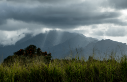 Waianae-Kai-Forest-Oahu