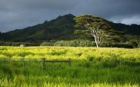 Kauai Pasture