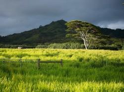 Pasture-Kauai