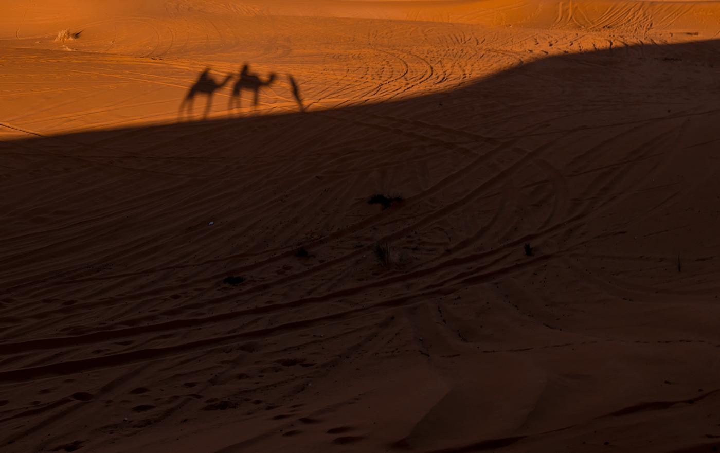 camel_desert-1