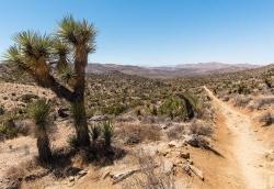 Lost Horse Mine Path