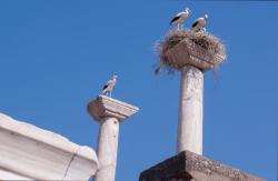 Stork nests, Old Roman city of Ephesus, Turkey