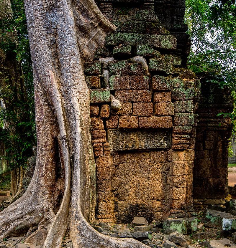 Forrest Temple Angkor Tom
