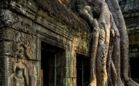 Jungle Temple, Angkor Wat, Cambodia
